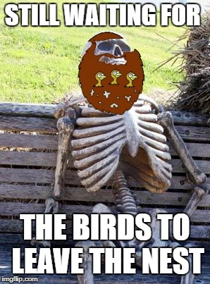 Waiting Skeleton Meme | STILL WAITING FOR THE BIRDS TO LEAVE THE NEST | image tagged in memes,waiting skeleton | made w/ Imgflip meme maker