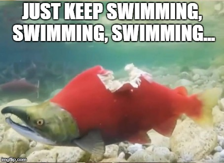 Carry on my bitten fish! | JUST KEEP SWIMMING, SWIMMING, SWIMMING... | image tagged in this is fine,this is fine dog,just keep swimming | made w/ Imgflip meme maker