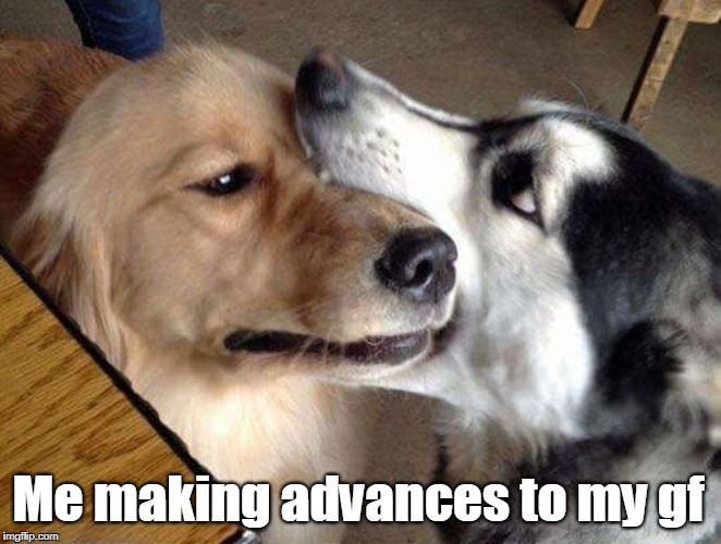 Making advances | Me making advances to my gf | image tagged in funny dogs,husky | made w/ Imgflip meme maker