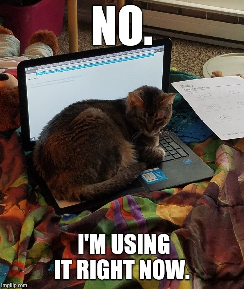 Cats on computers  | NO. I'M USING IT RIGHT NOW. | image tagged in cats,computer | made w/ Imgflip meme maker