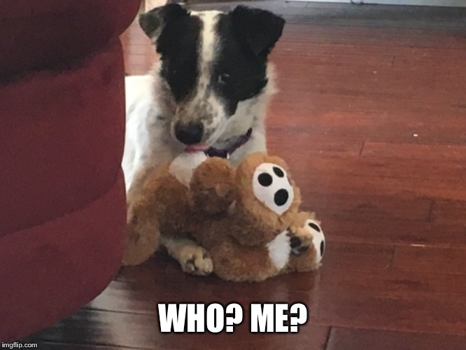 A Dogs Life | WHO? ME? | image tagged in caught in the act | made w/ Imgflip meme maker