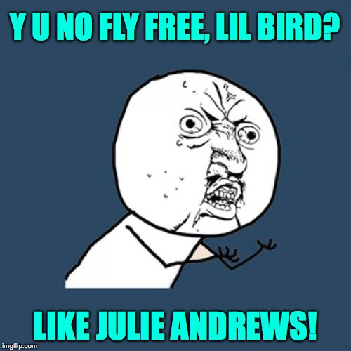 Y U No Meme | Y U NO FLY FREE, LIL BIRD? LIKE JULIE ANDREWS! | image tagged in memes,y u no | made w/ Imgflip meme maker