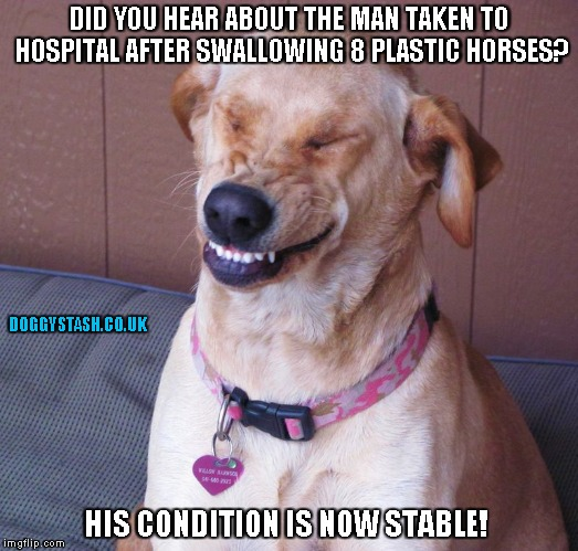DID YOU HEAR ABOUT THE MAN TAKEN TO HOSPITAL AFTER SWALLOWING 8 PLASTIC HORSES? HIS CONDITION IS NOW STABLE! | image tagged in laughing dog | made w/ Imgflip meme maker