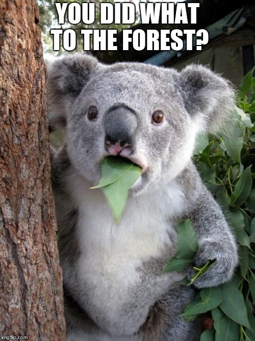 Surprised Koala Meme | YOU DID WHAT TO THE FOREST? | image tagged in memes,surprised koala | made w/ Imgflip meme maker