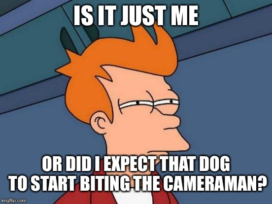 Futurama Fry Meme | IS IT JUST ME OR DID I EXPECT THAT DOG TO START BITING THE CAMERAMAN? | image tagged in memes,futurama fry | made w/ Imgflip meme maker