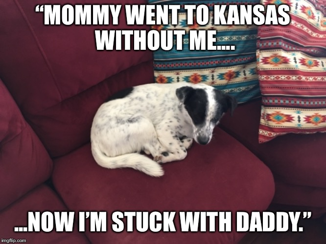 "A Dog's Life |  ""MOMMY WENT TO KANSAS WITHOUT ME.... ...NOW I'M STUCK WITH DADDY."" 