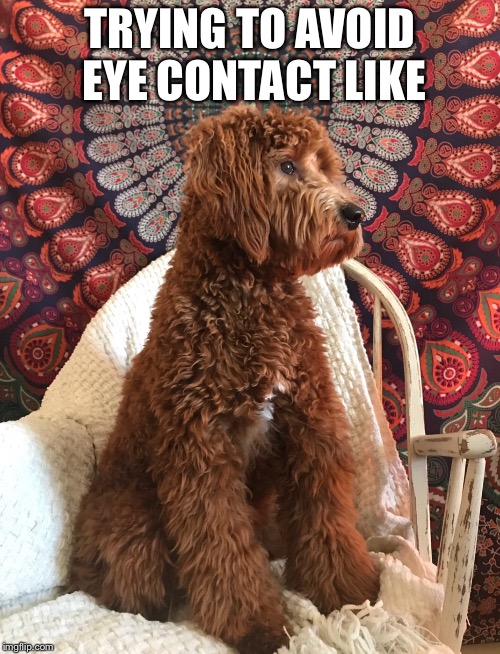 Trying to avoid eye contact | TRYING TO AVOID EYE CONTACT LIKE | image tagged in eye contact,sassy,cute dog | made w/ Imgflip meme maker