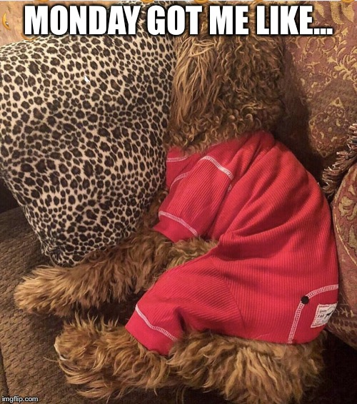 Monday got me like | MONDAY GOT ME LIKE... | image tagged in monday,mondays,sleepy dog,sleepy,tired,cute | made w/ Imgflip meme maker