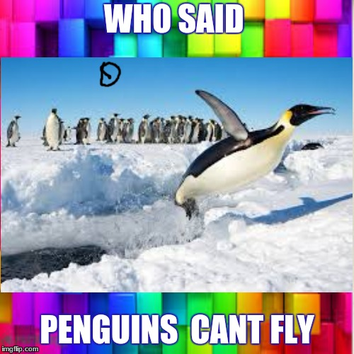 WHO SAID PENGUINS  CANT FLY | image tagged in pingu,fly | made w/ Imgflip meme maker