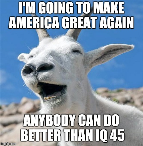 Laughing Goat | I'M GOING TO MAKE AMERICA GREAT AGAIN ANYBODY CAN DO BETTER THAN IQ 45 | image tagged in memes,laughing goat | made w/ Imgflip meme maker