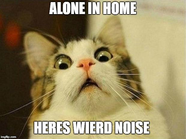 Scared Cat Meme | ALONE IN HOME HERES WIERD NOISE | image tagged in memes,scared cat | made w/ Imgflip meme maker
