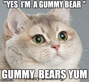 "Taco cat love gummy bears yes he  does  chicken  nuggets  too | ""YES  I'M  A GUMMY BEAR "" GUMMY  BEARS YUM 