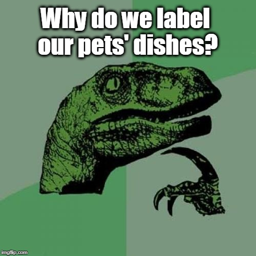 Philosoraptor | Why do we label our pets' dishes? | image tagged in memes,philosoraptor | made w/ Imgflip meme maker