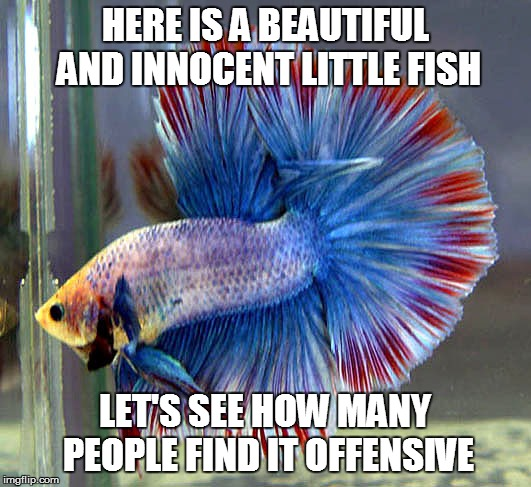 HERE IS A BEAUTIFUL AND INNOCENT LITTLE FISH LET'S SEE HOW MANY PEOPLE FIND IT OFFENSIVE | image tagged in siamese fighting fish | made w/ Imgflip meme maker
