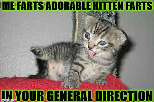 ME FARTS ADORABLE KITTEN FARTS IN YOUR GENERAL DIRECTION | image tagged in kitten farts | made w/ Imgflip meme maker