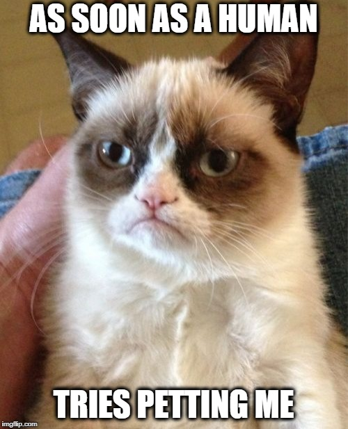 Grumpy Cat Meme | AS SOON AS A HUMAN TRIES PETTING ME | image tagged in memes,grumpy cat | made w/ Imgflip meme maker