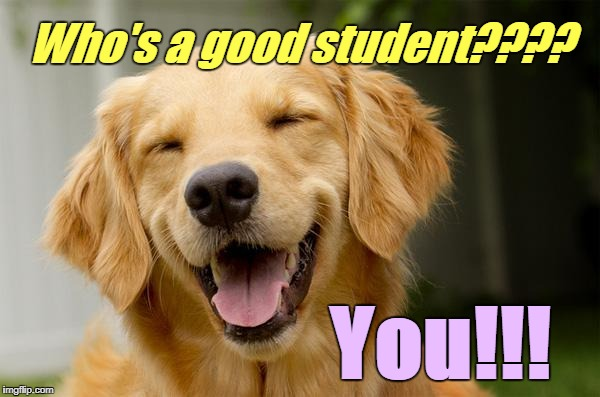 Happy Dog | Who's a good student???? You!!! | image tagged in happy dog | made w/ Imgflip meme maker