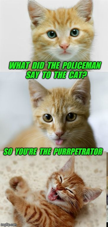 Bad Pun Cat | WHAT  DID  THE  POLICEMAN  SAY  TO  THE  CAT? SO  YOU'RE  THE  PURRPETRATOR | image tagged in bad pun cat,cat,police,cute,cute cat,bad pun | made w/ Imgflip meme maker