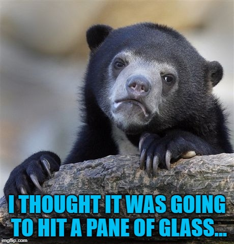 Confession Bear Meme | I THOUGHT IT WAS GOING TO HIT A PANE OF GLASS... | image tagged in memes,confession bear | made w/ Imgflip meme maker