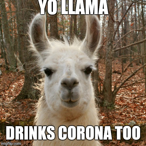 yo llama | YO LLAMA DRINKS CORONA TOO | image tagged in yo llama | made w/ Imgflip meme maker