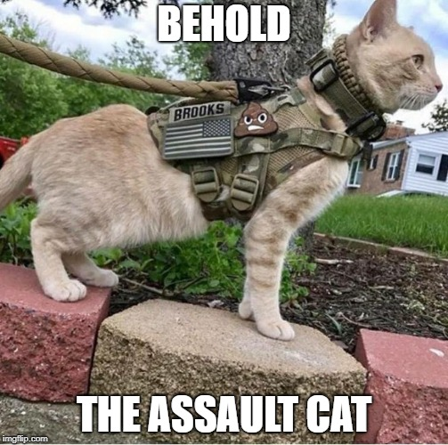 BEHOLD THE ASSAULT CAT | image tagged in assault cat | made w/ Imgflip meme maker
