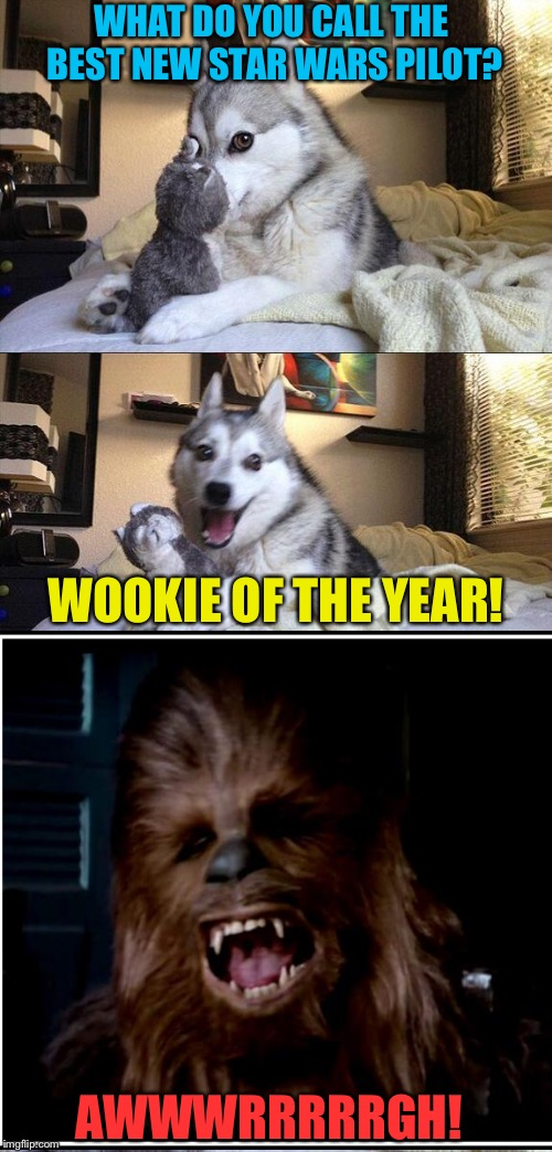 Calm down.  Here, have some chewing tobacco. |  WHAT DO YOU CALL THE BEST NEW STAR WARS PILOT? WOOKIE OF THE YEAR! AWWWRRRRRGH! | image tagged in bad pun dog,star wars,chewbacca,memes,funny | made w/ Imgflip meme maker