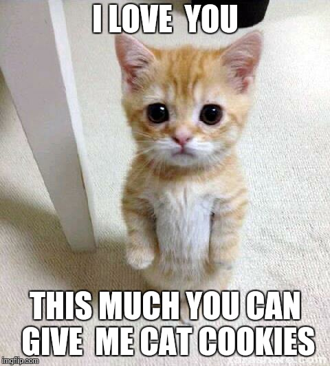 Cute Cat Meme | I LOVE  YOU THIS MUCH YOU CAN GIVE  ME CAT COOKIES | image tagged in memes,cute cat,grumpy cat,cat,cookies,funny cats | made w/ Imgflip meme maker