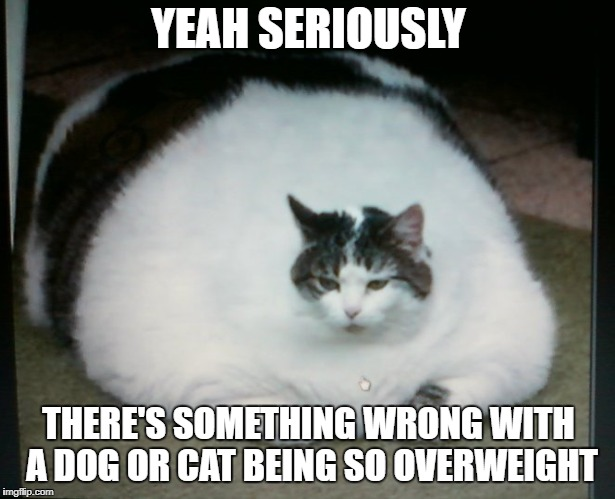 YEAH SERIOUSLY THERE'S SOMETHING WRONG WITH A DOG OR CAT BEING SO OVERWEIGHT | made w/ Imgflip meme maker