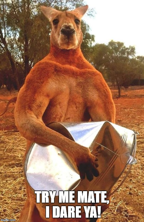 Kangaroo Crushing tin bucket | TRY ME MATE, I DARE YA! | image tagged in kangaroo crushing tin bucket | made w/ Imgflip meme maker