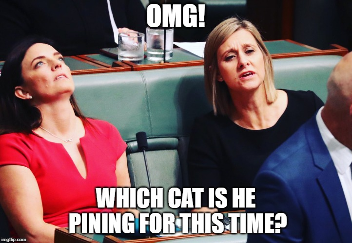 OMG! WHICH CAT IS HE PINING FOR THIS TIME? | image tagged in emma husarmp | made w/ Imgflip meme maker