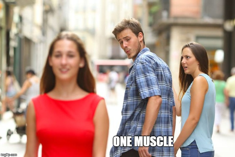 Distracted Boyfriend Meme | ONE MUSCLE | image tagged in memes,distracted boyfriend | made w/ Imgflip meme maker