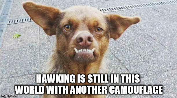 hawking's camouflage | HAWKING IS STILL IN THIS WORLD WITH ANOTHER CAMOUFLAGE | image tagged in stephen hawking,camouflage,dog,meme,funny dog | made w/ Imgflip meme maker