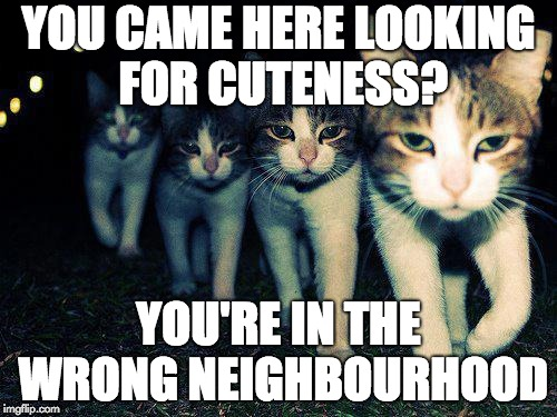 Wrong Neighboorhood Cats | YOU CAME HERE LOOKING FOR CUTENESS? YOU'RE IN THE WRONG NEIGHBOURHOOD | image tagged in memes,wrong neighboorhood cats | made w/ Imgflip meme maker