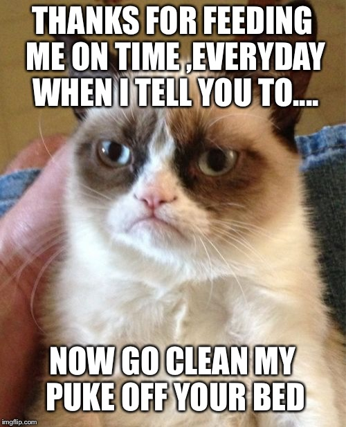 Still worth it | THANKS FOR FEEDING ME ON TIME ,EVERYDAY WHEN I TELL YOU TO.... NOW GO CLEAN MY PUKE OFF YOUR BED | image tagged in memes,grumpy cat | made w/ Imgflip meme maker