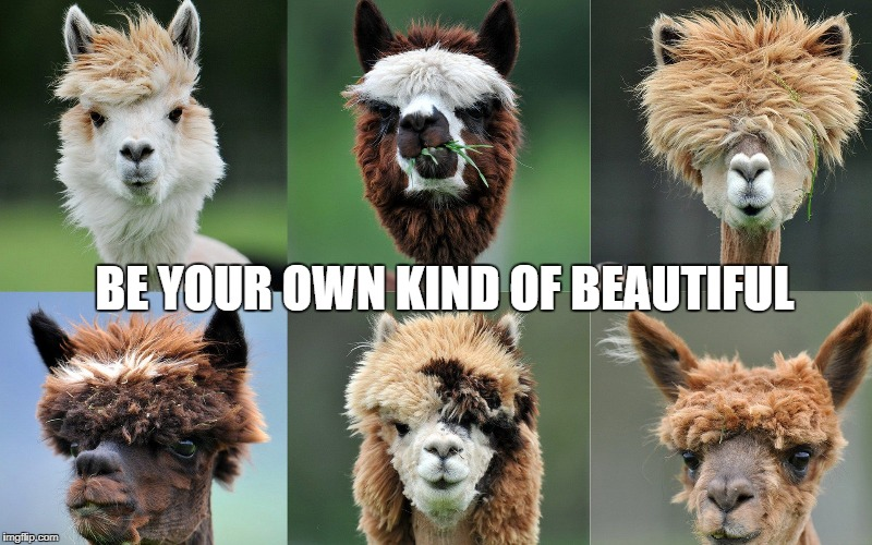 Lama Glama | BE YOUR OWN KIND OF BEAUTIFUL | image tagged in llamas,alpaca,motivational,humor,funny animals,inspirational | made w/ Imgflip meme maker