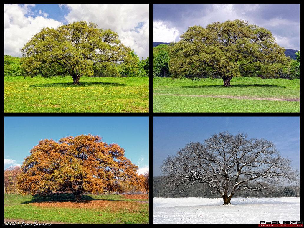 дерево зимой летом на одной картинке продаже товаров