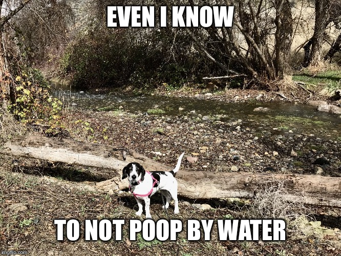 EVEN I KNOW TO NOT POOP BY WATER | image tagged in meme_mine | made w/ Imgflip meme maker