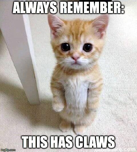 Kitten: Cute, cuddly little thing with CLAWS | ALWAYS REMEMBER: THIS HAS CLAWS | image tagged in memes,cute cat | made w/ Imgflip meme maker