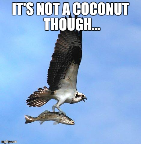 fish | IT'S NOT A COCONUT THOUGH... | image tagged in fish | made w/ Imgflip meme maker