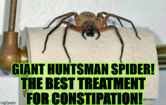 GIANT HUNTSMAN SPIDER! THE BEST TREATMENT FOR CONSTIPATION! | image tagged in you will now poop | made w/ Imgflip meme maker