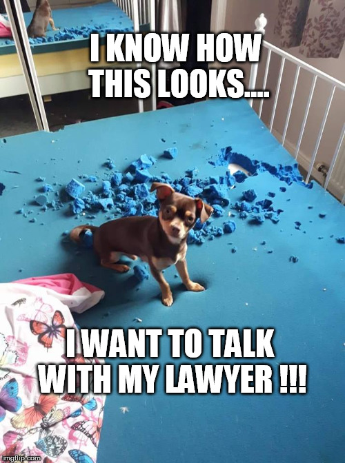 I KNOW HOW THIS LOOKS.... I WANT TO TALK WITH MY LAWYER !!! | image tagged in i want my lawyer chi | made w/ Imgflip meme maker