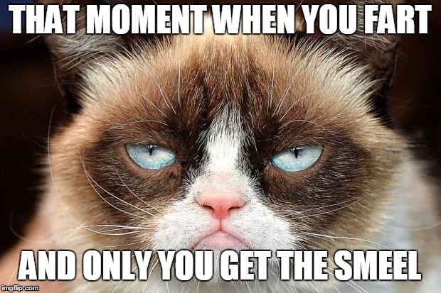Grumpy Cat Not Amused Meme | THAT MOMENT WHEN YOU FART AND ONLY YOU GET THE SMEEL | image tagged in memes,grumpy cat not amused,grumpy cat | made w/ Imgflip meme maker
