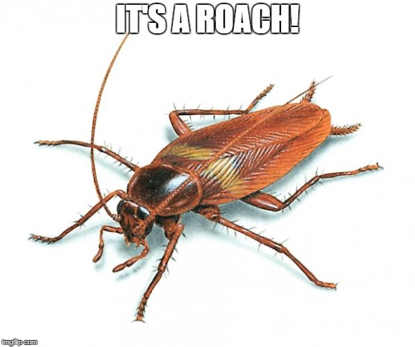 Cockroach | IT'S A ROACH! | image tagged in cockroach | made w/ Imgflip meme maker