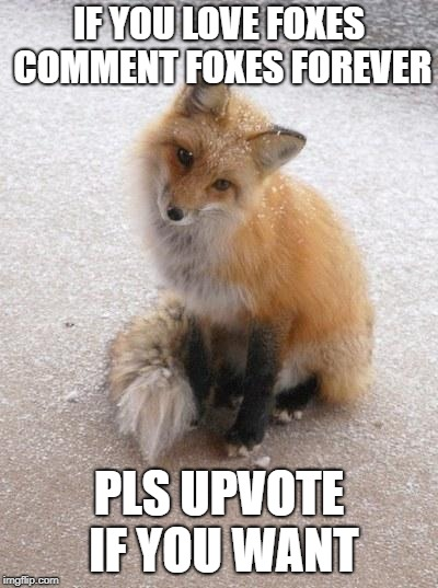 Fox | IF YOU LOVE FOXES COMMENT FOXES FOREVER PLS UPVOTE IF YOU WANT | image tagged in fox | made w/ Imgflip meme maker