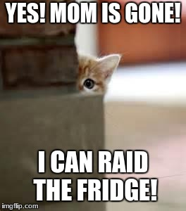 kitten | YES! MOM IS GONE! I CAN RAID THE FRIDGE! | image tagged in kitten | made w/ Imgflip meme maker