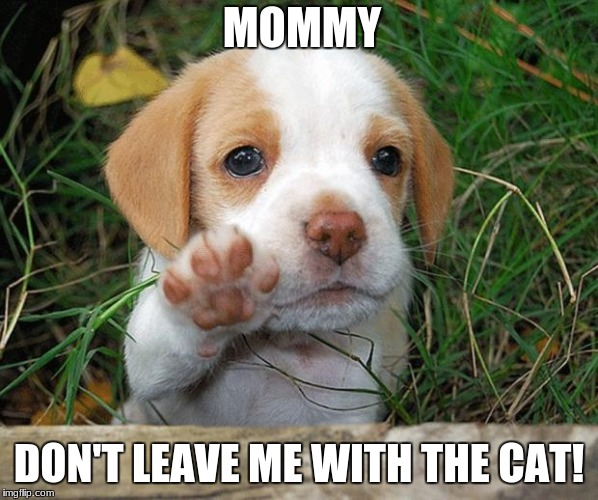 dog puppy bye | MOMMY DON'T LEAVE ME WITH THE CAT! | image tagged in dog puppy bye | made w/ Imgflip meme maker