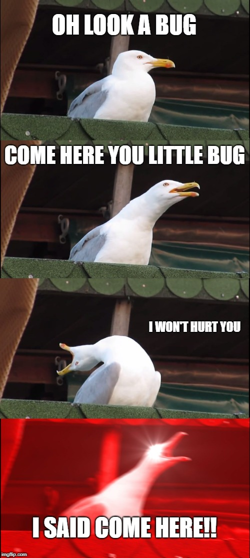 Inhaling Seagull Meme | OH LOOK A BUG COME HERE YOU LITTLE BUG I WON'T HURT YOU I SAID COME HERE!! | image tagged in memes,inhaling seagull | made w/ Imgflip meme maker
