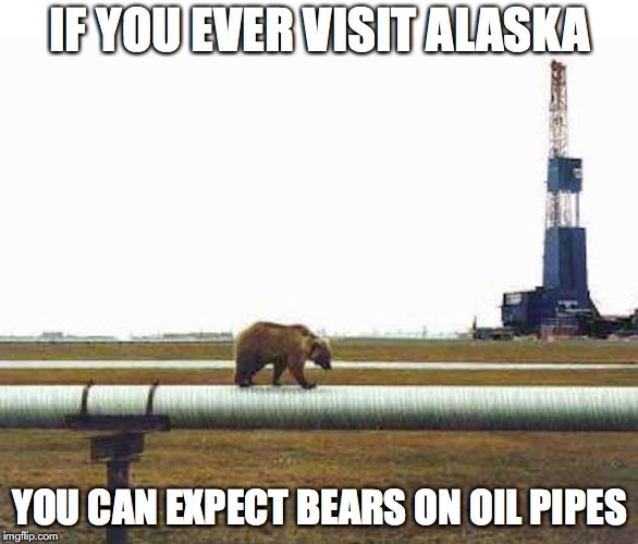Bear on Oil Pipe | IF YOU EVER VISIT ALASKA YOU CAN EXPECT BEARS ON OIL PIPES | image tagged in bear,alaska,memes | made w/ Imgflip meme maker