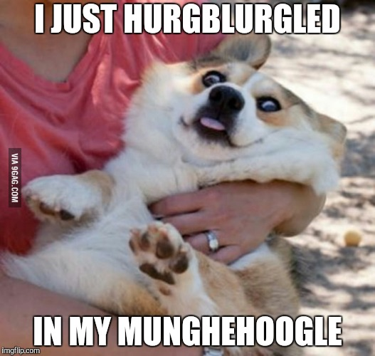 "My template ""derp dog"" 