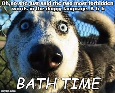 My dogs when bath time comes | Oh,no she just said the two most forbidden words in the doggy language. B-b-b BATH TIME | image tagged in scared dog | made w/ Imgflip meme maker